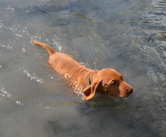 ich schwimme besser als meine neuer Chef .....
